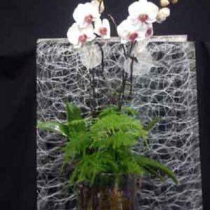 Centro Orquídeas Amelia