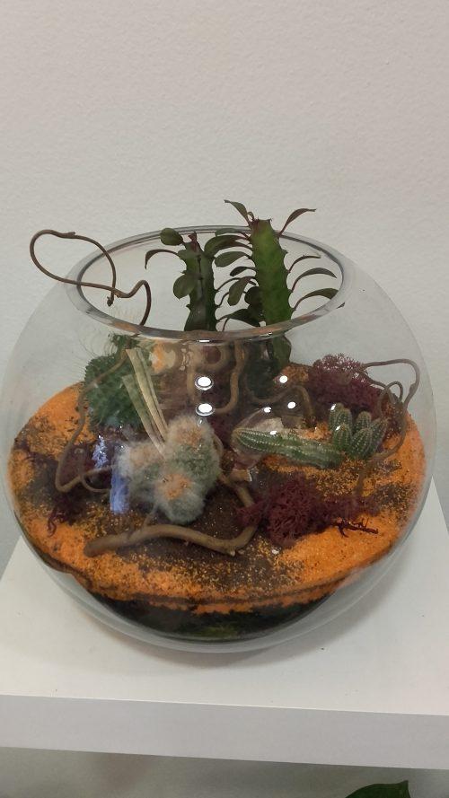 Centro cactus