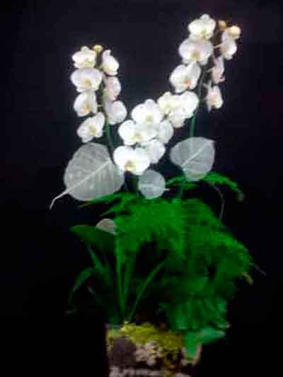 Centro orquideas Cristina