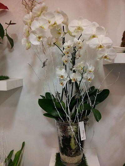 Centro orquideas Deluxe