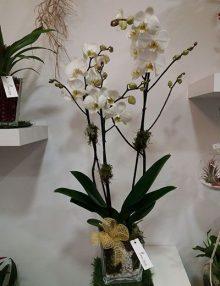 Centro orquideas Japan