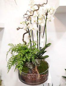 Centro orquideas Paisajismo