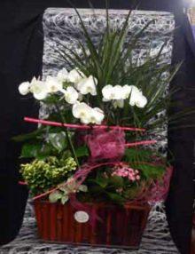Centro plantas con orquideas