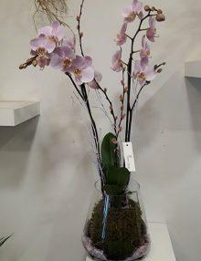 Orquidea kokedama en cristal