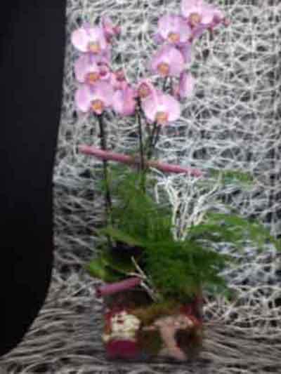 Centro orquídeas rosa