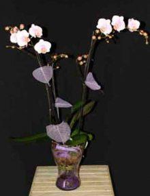 Centro Orquídeas violeta Ainara Floristas