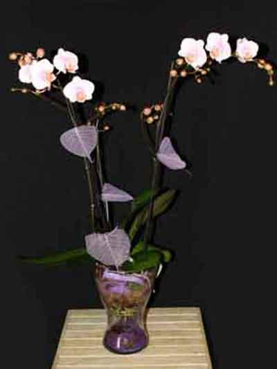 Centro Orquídeas violeta