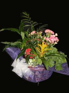 Centro plantas variado Ainara Floristas