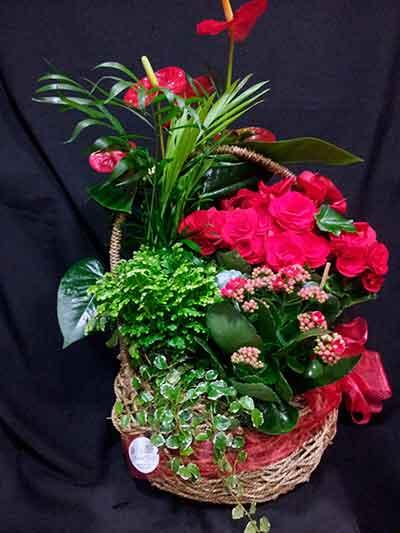 Cesta plantas con flor