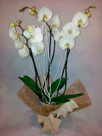 Orquidea decorada floristerias Madrid