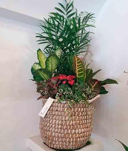 Cesta de plantas interior florister a en madrid ainara for Plantas de interior madrid