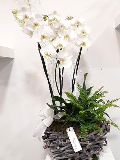 Orquidea Espino