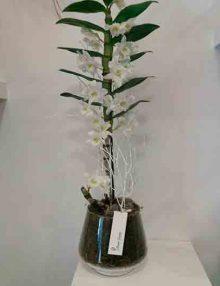 Orquídea-dendrobiúm Floristería Madrid Ainara Floristas