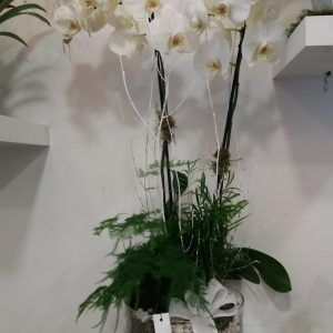 Centro orquideas Ainara