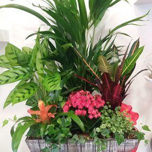 Centro plantas Lydia