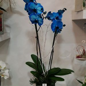 Orquideas azules