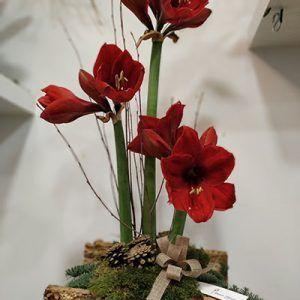 Centro flor Amarilys Tronco